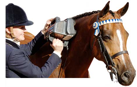 Equine Professional Massager By Thumper